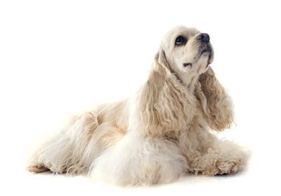 画像出典:みんなの犬図鑑