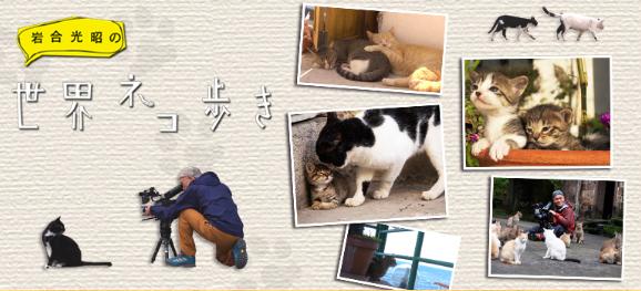 https://www4.nhk.or.jp/nekoaruki/